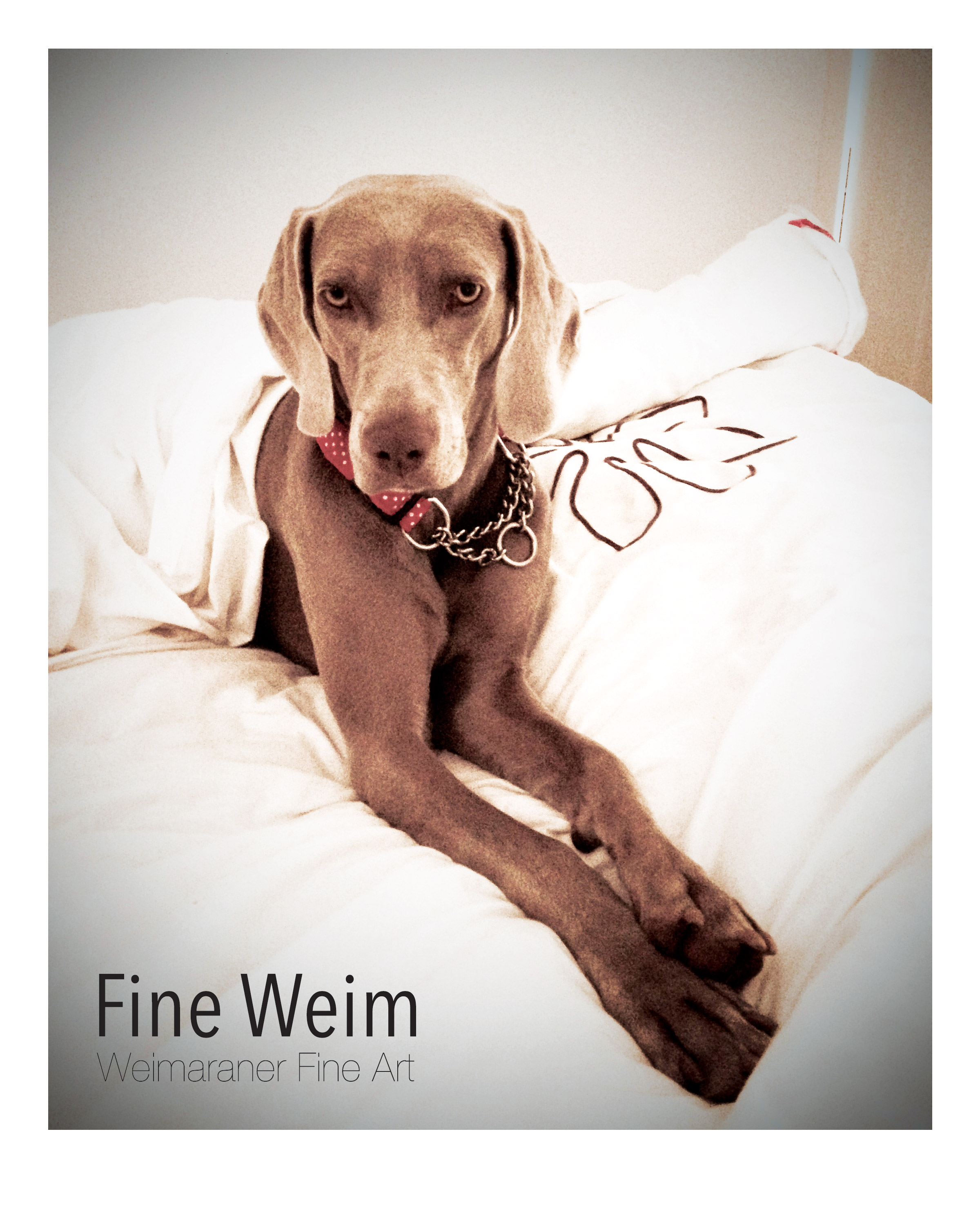 Weimaraner Fine Art Print: Some Weim time