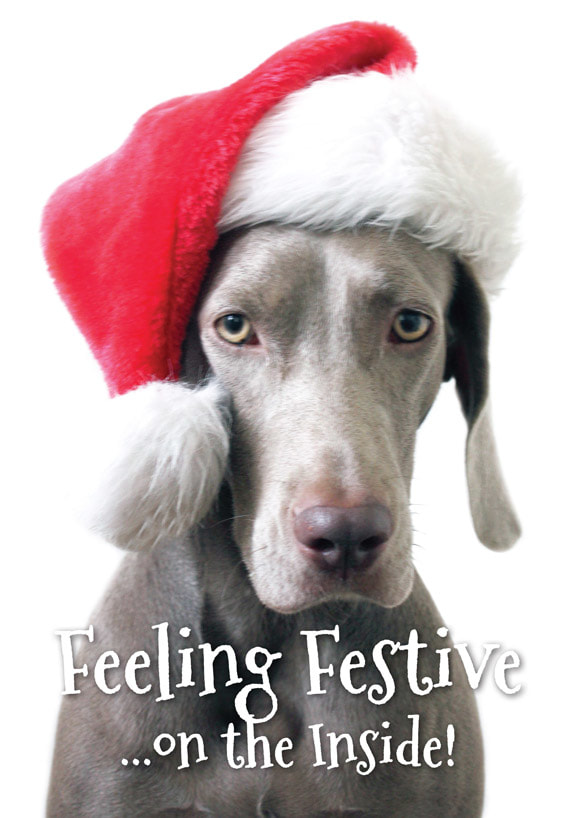 Feeling Festive - Fine Weim Christmas Card
